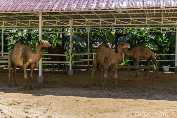 Dairy-Hut-Farm-PhangNga-22